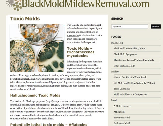 Mold Mildew Removal