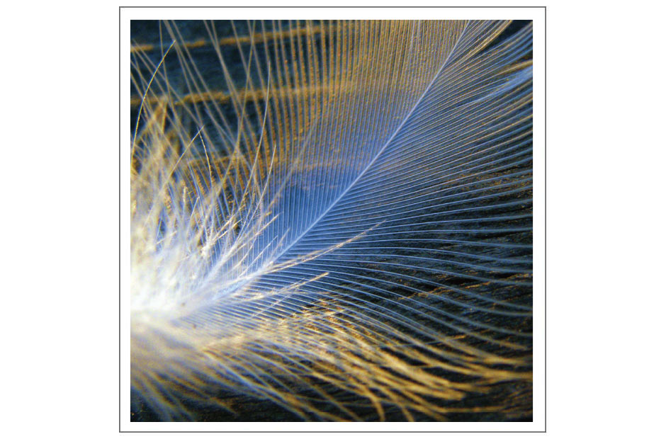 """Feather– BV010 – 5 1/4"""" square – Blank – $2.00"""